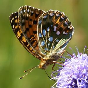 Orden Lepidoptera
